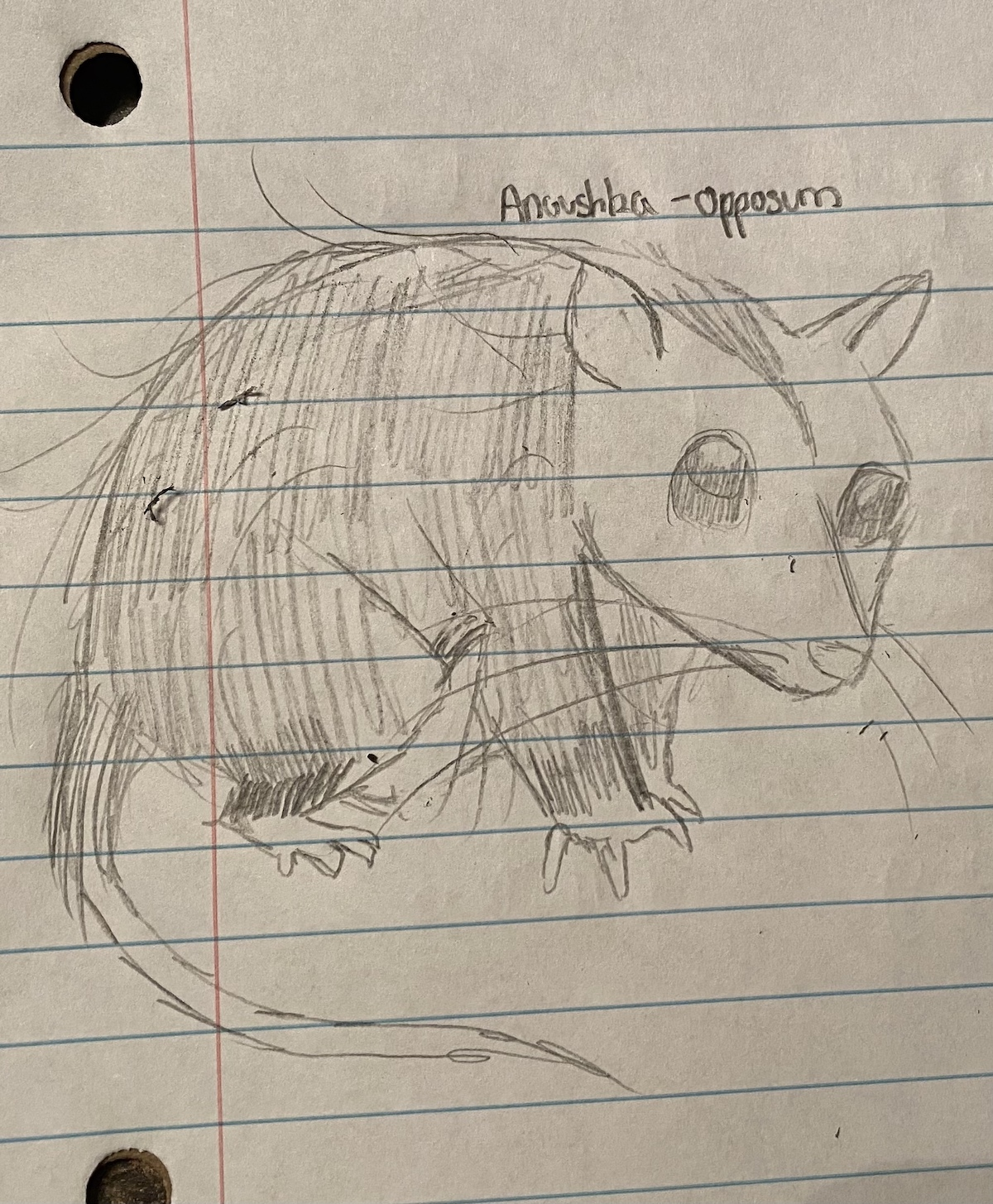 sketch of an opossum on notebook paper