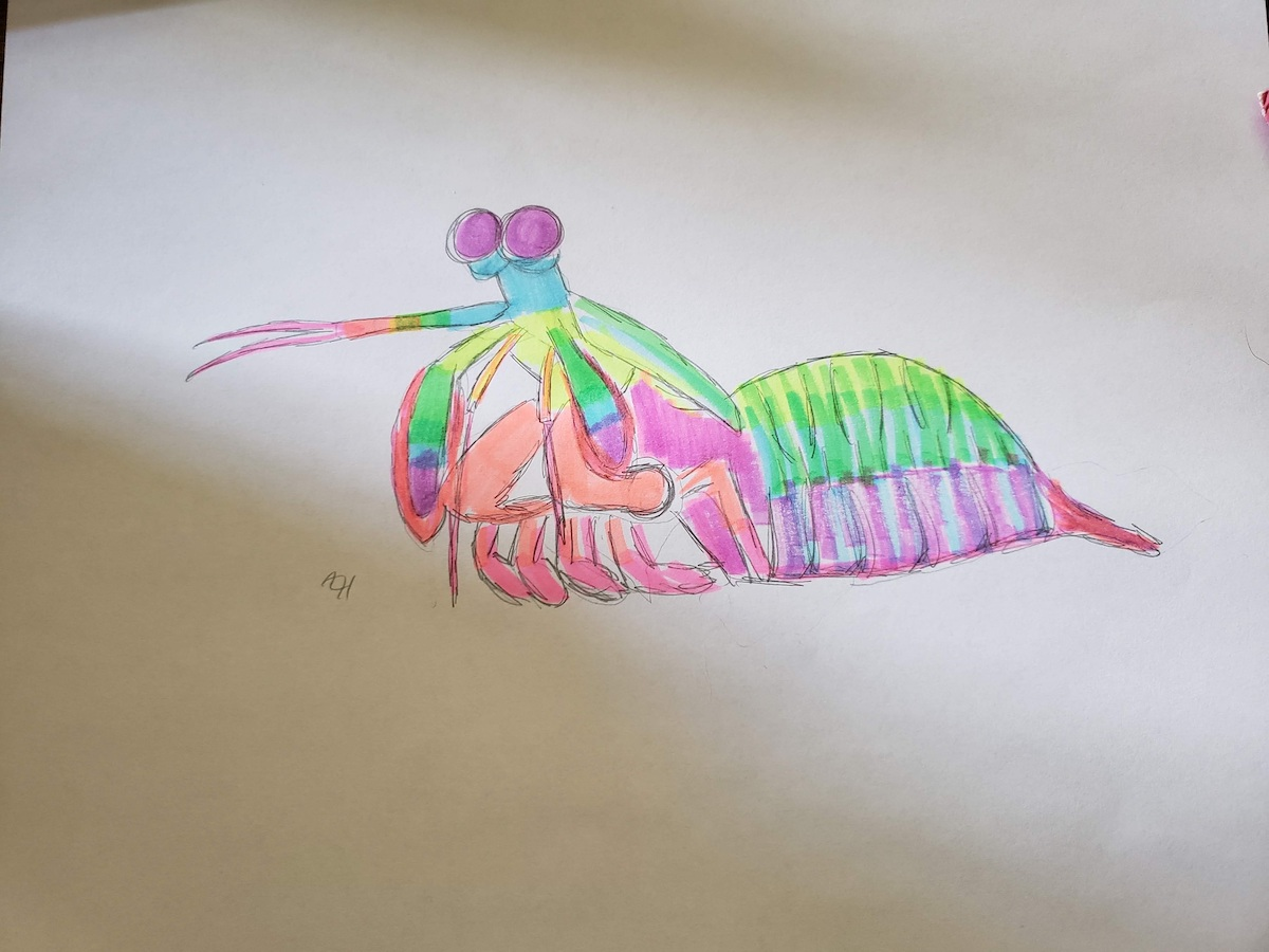colorful pink and green watercolor painting of a mantis shrimp